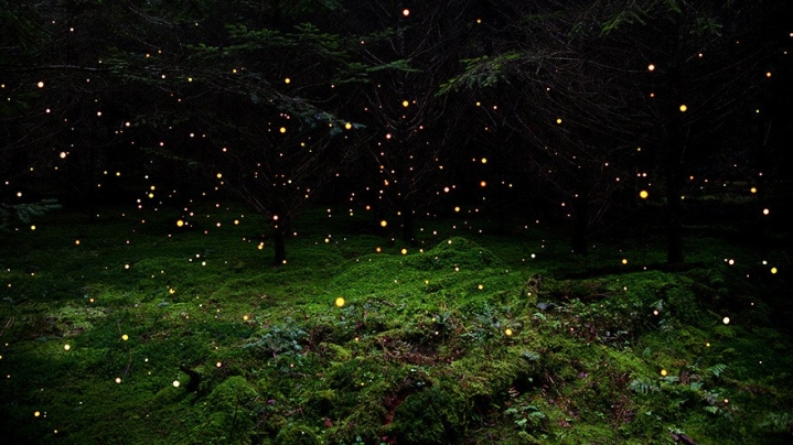 The meditations on a firefly